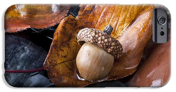 New Leaf iPhone 6s Case - Autumn In Central Park With Acorn On by John A. Anderson