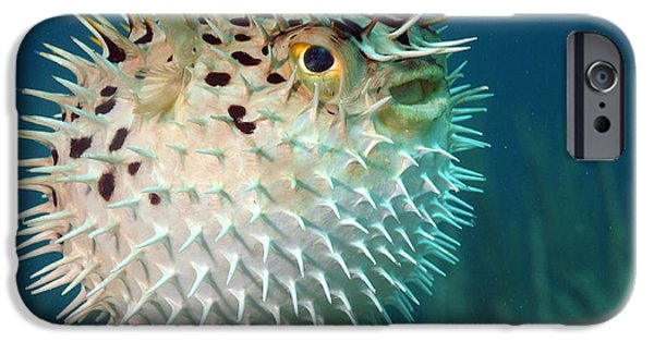 Scuba Diver iPhone 6s Case - Blowfish Or Diodon Holocanthus by Beth Swanson