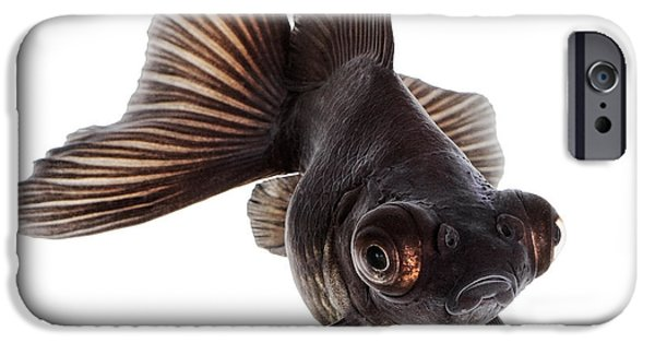 Aquarium iPhone 6s Case - Brown Goldfish Isolated On White by Vangert