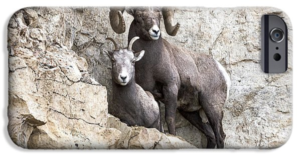 Rocky Mountain Bighorn Sheep iPhone 6s Case - Cliff Notes by Scott Warner