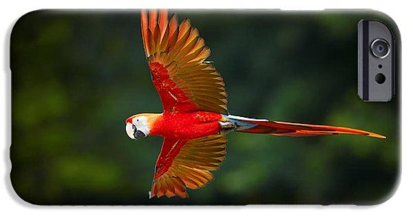 Scarlet iPhone 6s Case - Close Up Ara Macao, Scarlet Macaw, Red by Martin Mecnarowski