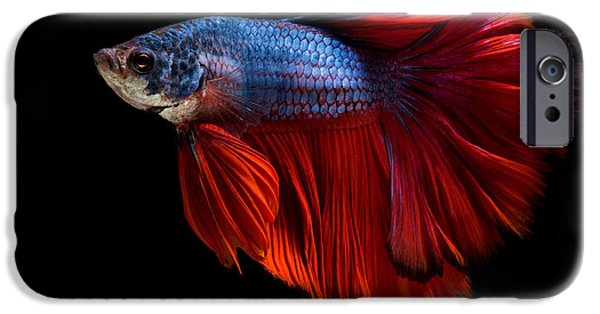 Swimming iPhone 6s Case - Colourful Betta Fish,siamese Fighting by Nuamfolio