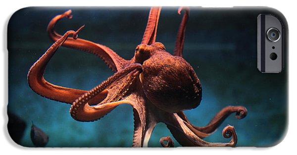 Aquarium iPhone 6s Case - Common Octopus Octopus Vulgaris by Vladimir Wrangel
