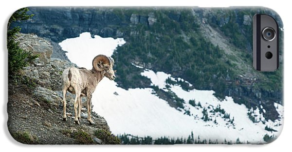 Rocky Mountain Bighorn Sheep iPhone 6s Case - Crevace Ram by Todd Klassy