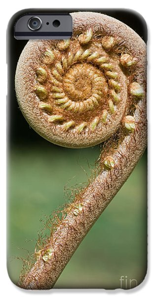 New Leaf iPhone 6s Case - Curled Young Fern by Kurt g