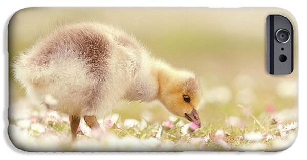 Gosling iPhone 6s Case - Cute Overload Series - Grazing Gosling by Roeselien Raimond