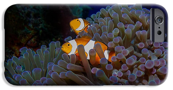 Scuba Diver iPhone 6s Case - Detail Of The Purple Anemone Coral With by Kristina Vackova