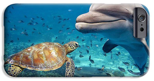 Scuba Diver iPhone 6s Case - Dolphin And Turtle Underwater On Reef by Andrea Izzotti