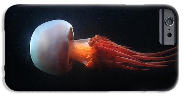 Aquarium iPhone 6s Case - Flame Jellyfish Rhopilema Esculentum by Vladimir Wrangel