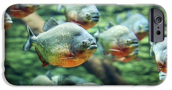 Aquarium iPhone 6s Case - Flock Of Piranhas Swim Nature Wildlife by Risteski Goce