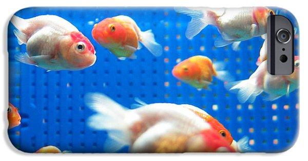 Aquarium iPhone 6s Case - Goldfish by Johnny Lye