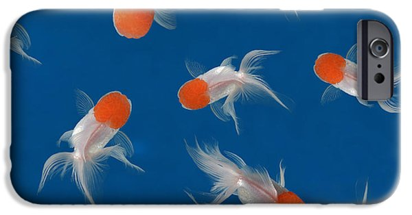 Aquarium iPhone 6s Case - Goldfish Texture On Blue Background For by Bluehand