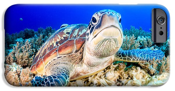 Aquarium iPhone 6s Case - Green Turtle On The Sea Bed by Richard Whitcombe