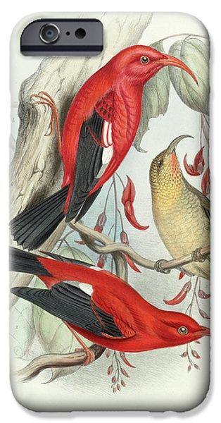 Scarlet iPhone 6s Case - Iwi by Scott Barchard Wilson