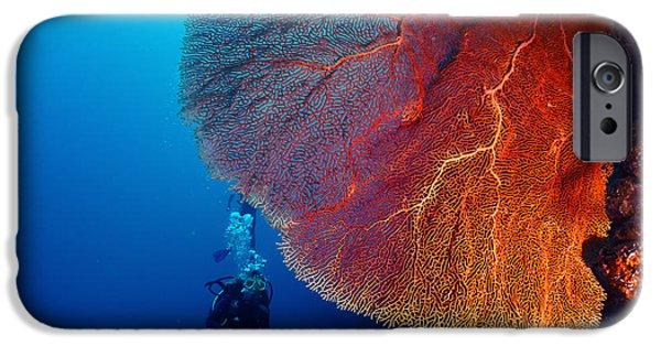 Scuba Diver iPhone 6s Case - Lady Diver Exploring Tropical Bright by Dudarev Mikhail