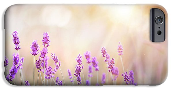 Perfume iPhone 6s Case - Lavender Bushes Closeup On Sunset by Kotkoa