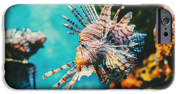 Aquarium iPhone 6s Case - Lion Fish Hunting Among Coral Reefs by Nine tomorrows