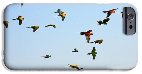 Scarlet iPhone 6s Case - Macaw And Sun Conure Flock Of Flying In by Jeep2499