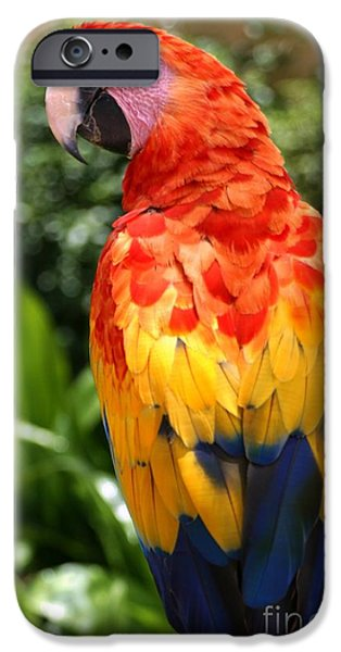 Scarlet iPhone 6s Case - Macaw Sitting On A Branch by Paul Banton