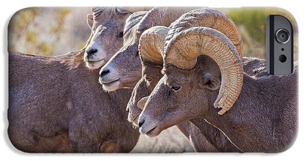 Rocky Mountain Bighorn Sheep iPhone 6s Case - Meeting Of The Horns by Jurgen Lorenzen