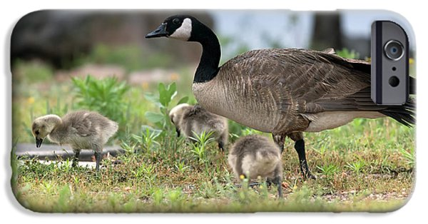 Gosling iPhone 6s Case - Momma Goose And The Babies by Gary Langley