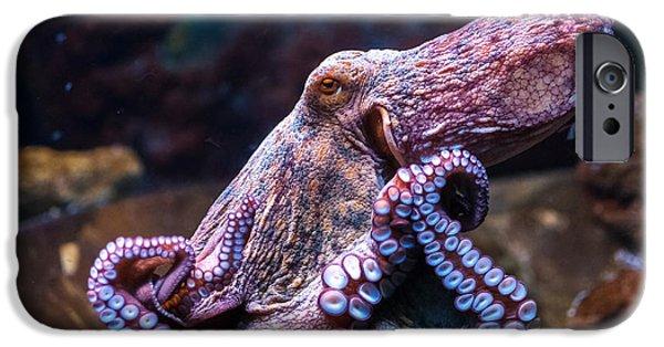 Aquarium iPhone 6s Case - Octopus In Water by Olga Visavi