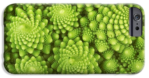 Fractal iPhone 6s Case - Roman Broccoli Isolated On White by O.bellini