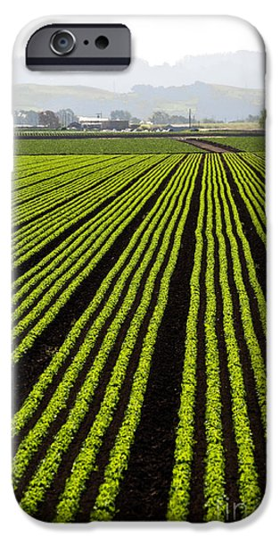 New Leaf iPhone 6s Case - Rows Of Freshly Planted Lettuce In The by Dwight Smith