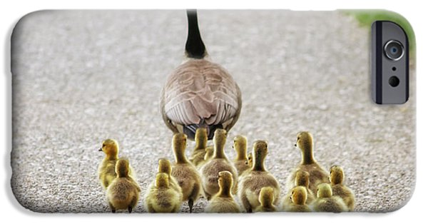 Gosling iPhone 6s Case - Shallow Dof On Babies A Cute Family Of by Annette Shaff