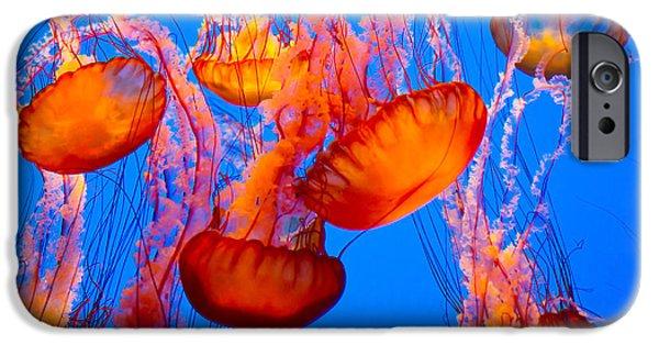 Aquarium iPhone 6s Case - Spectacular Jellyfish by Bierchen