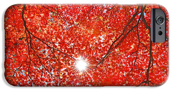 Scarlet iPhone 6s Case - Sun Light Through The Red Fall Maple by Maxim Tupikov