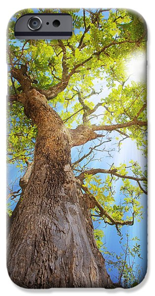 New Leaf iPhone 6s Case - Sun Rays Streaming Through Tree by Johan Swanepoel