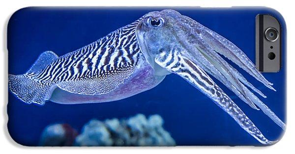 Aquarium iPhone 6s Case - The Common European Cuttlefish Sepia by David Litman
