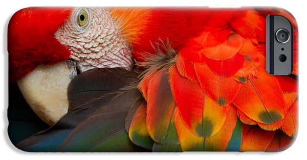 Scarlet iPhone 6s Case - The Scarlet Macaw Is A Large Colorful by Ammit Jack