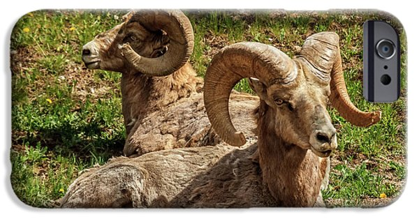 Rocky Mountain Bighorn Sheep iPhone 6s Case - Two Resting Bighorn Sheep by Robert Bales