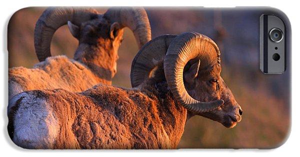 Rocky Mountain Bighorn Sheep iPhone 6s Case - Warm Touch by Kadek Susanto