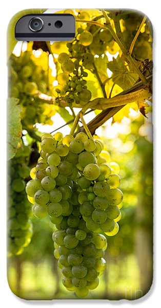 New Leaf iPhone 6s Case - Wine Season by Rzoze19