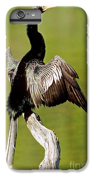 Anhinga Anhinga Anhinga Drying Plumage IPhone 6s Plus Case