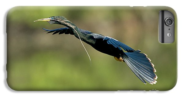 Anhinga IPhone 6s Plus Case