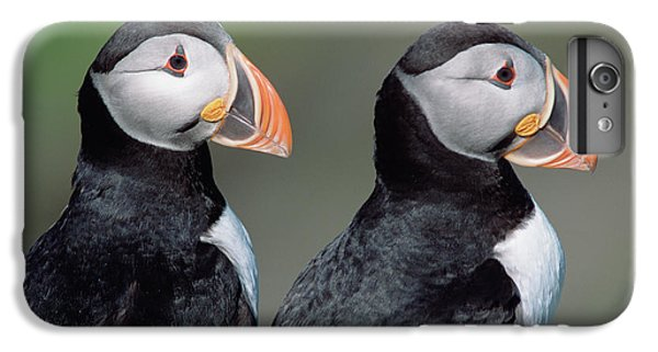 Atlantic Puffins In Breeding Colors IPhone 6s Plus Case by Yva Momatiuk and John Eastcott