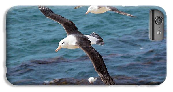 Black-browed Albatross (thalassarche IPhone 6s Plus Case