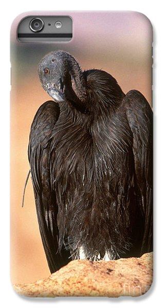 California Condor IPhone 6s Plus Case