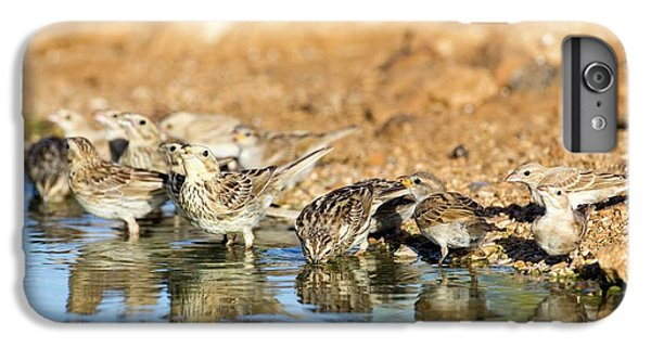 Corn Bunting Emberiza Calandra IPhone 6s Plus Case by Photostock-israel