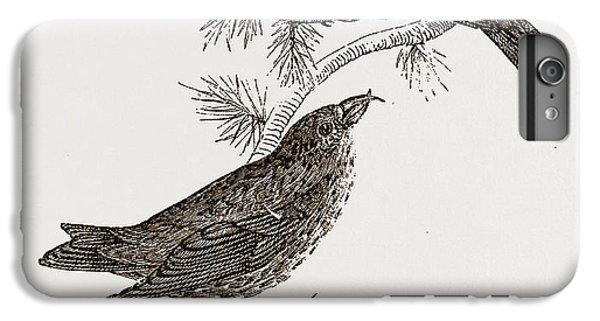 Crossbills IPhone 6s Plus Case by Litz Collection