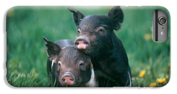 Domestic Piglets IPhone 6s Plus Case