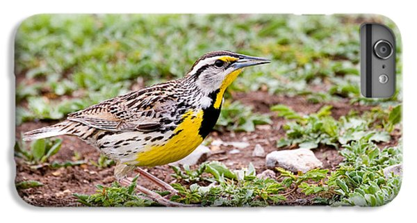 Eastern Meadowlark Sturnella Magna IPhone 6s Plus Case by Gregory G. Dimijian