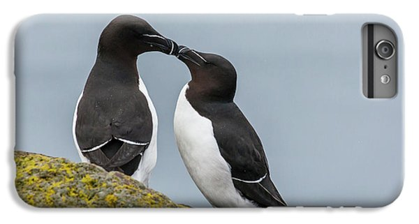 Europe, Iceland, Latrabjarg IPhone 6s Plus Case by Jaynes Gallery