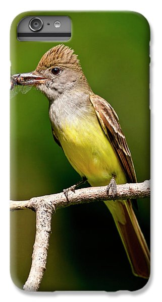 Flycatcher iPhone 6s Plus Case - Great Crested Flycatcher Myiarchus by David Northcott