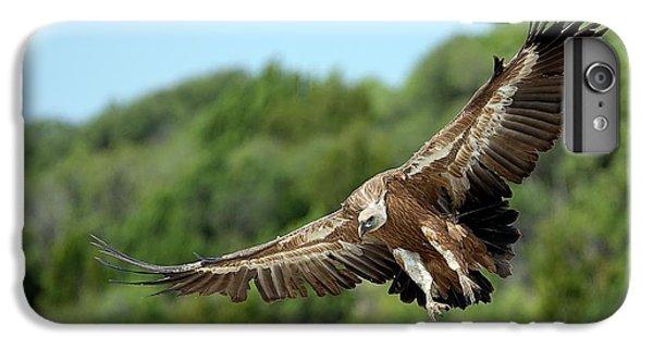Griffon Vulture IPhone 6s Plus Case by Nicolas Reusens
