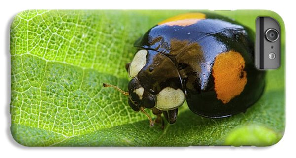 Harlequin Ladybird IPhone 6s Plus Case by Heath Mcdonald